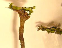 gekrönte häupter